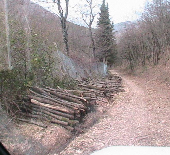 Sentiero con legna